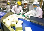 Работа в Польше на Фабрике по Изготовлению Сыров President